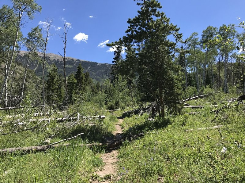Head east up the Acorn Creek Trail to views up toward the ridge objective. Colorado blue columbine dot the trail.
