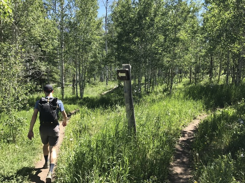 For a low-use trail, the start of the Acorn Creek Trail had clear signage to follow.