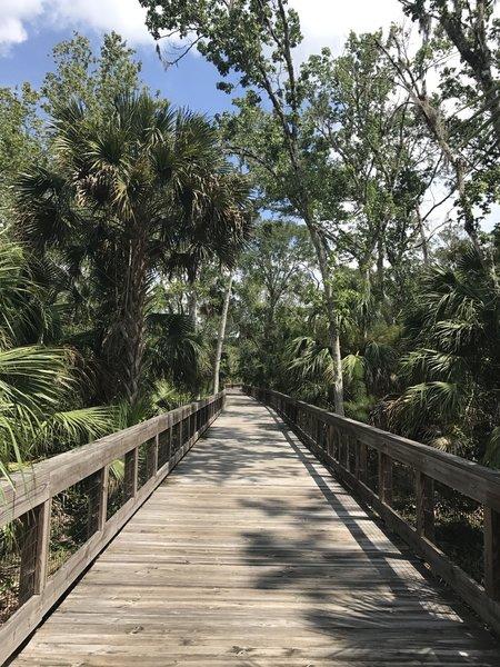 A wooden boardwalk makes travel easy over Graham Swamp.
