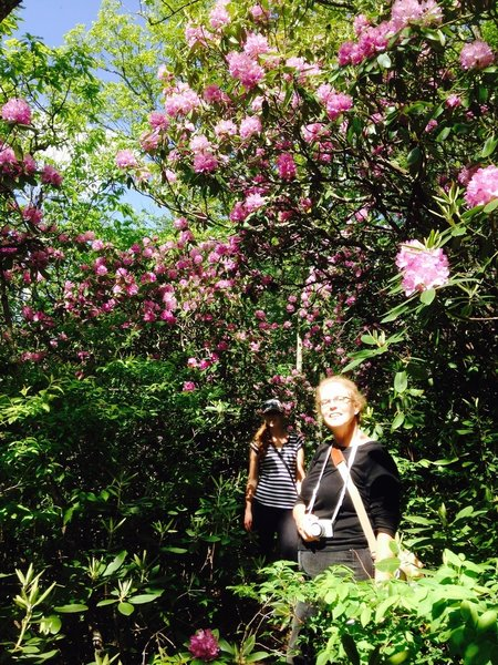 Comers Rock Section goes through dense rhododendron forest (blooms around late May).