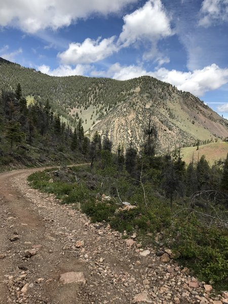 The logging road on the way to the Custer Motorway. It is all downhill but those with minimalist shoes will get beat up by the rocks. If your quads are ok, they won't be soon!