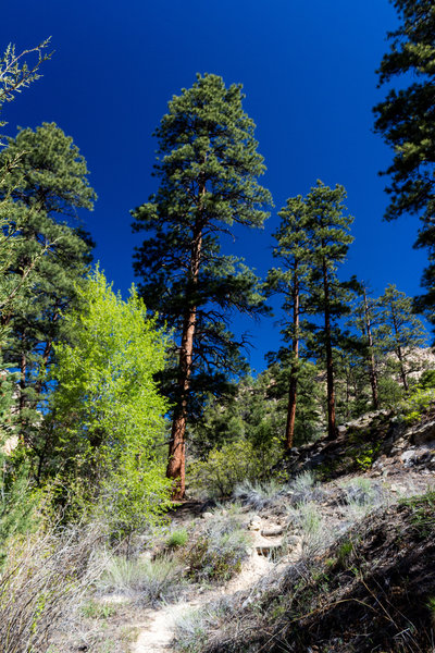 The trail travels up the sandy slopes next to Pine Creek.