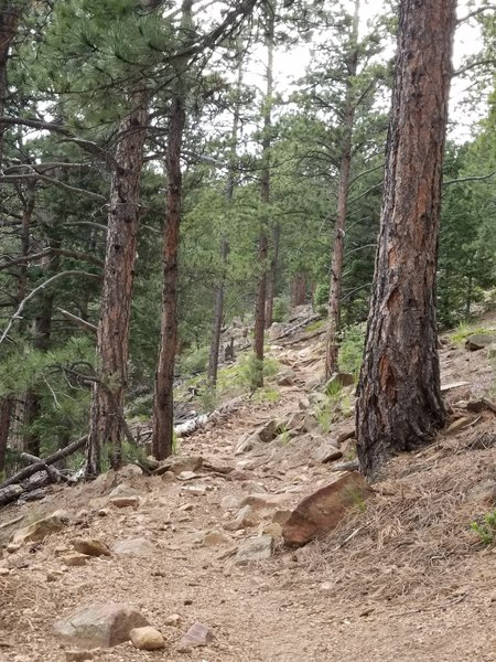 The St. Mary Falls Trail heads toward the summit of Mount Rosa. The terrain is rough and rocky, so be careful.