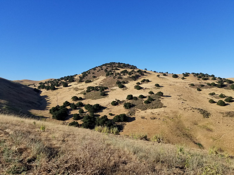 Brushy Peak is right nearby the West Side Loop Trail.