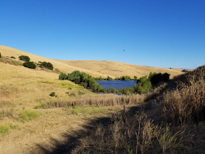 This is the main pond in Brushy Peak Regional Preserve.