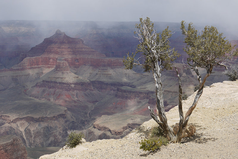 A lone tree witnesses a moody Grand Canyon from Maricopa Point.