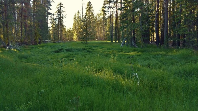 Enjoy this small, lush meadow along the Lily Pond Trail.