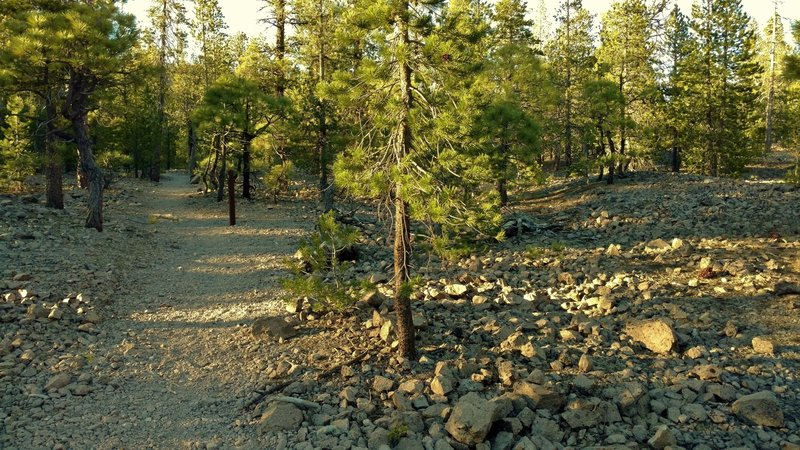 Experience the Dwarf Forest, a rejuvenating forest, along Lily Pond Trail. The rocks are part of Chaos Jumble, the remnants of a huge rock avalanche that buried the original forest about 350 years ago.