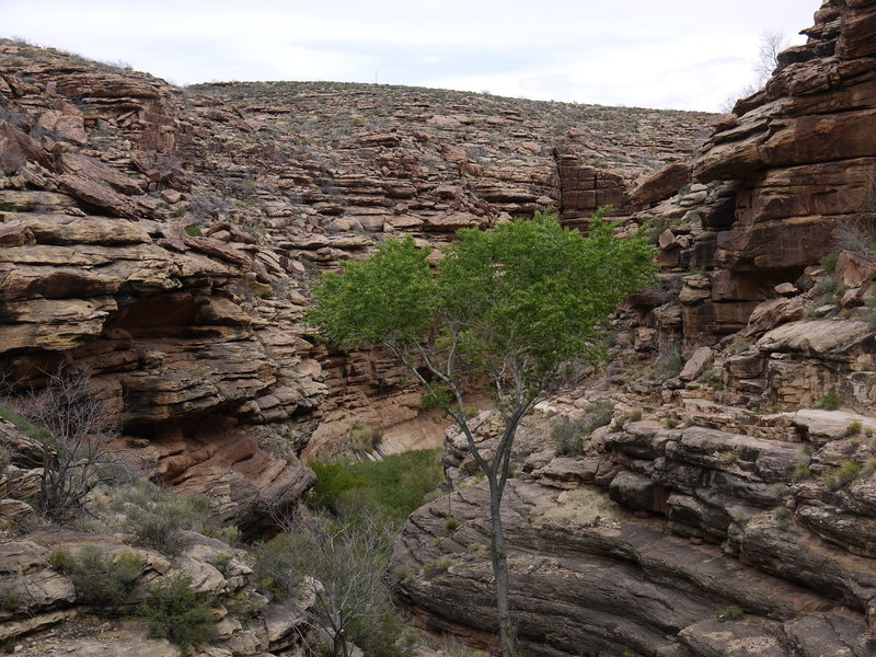 A spindly tree grows in the Devil's Corkscrew region of the Bright Angel Trail.