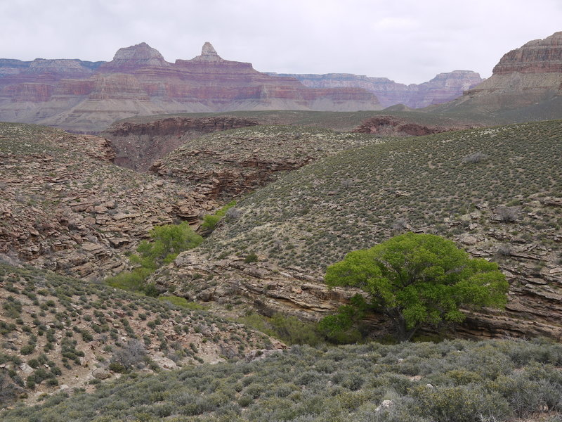 Bright Angel Canyon poses with Zoroaster Temple in the distance across the Colorado River.