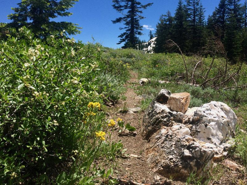The Split Rock Trail is faint but delightful.