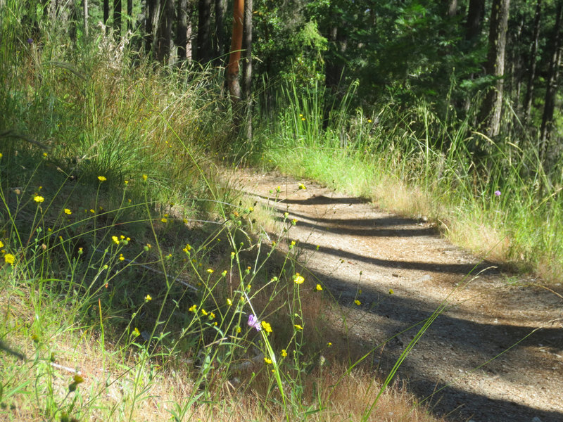 The Caterpillar Trail is buffered by a wide mix of grasses and flowers.