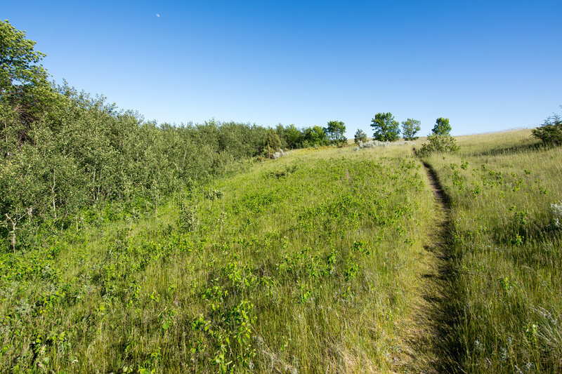 Along the trail to Sperati Point, enjoy beautiful grassy meadows and a big, big sky.