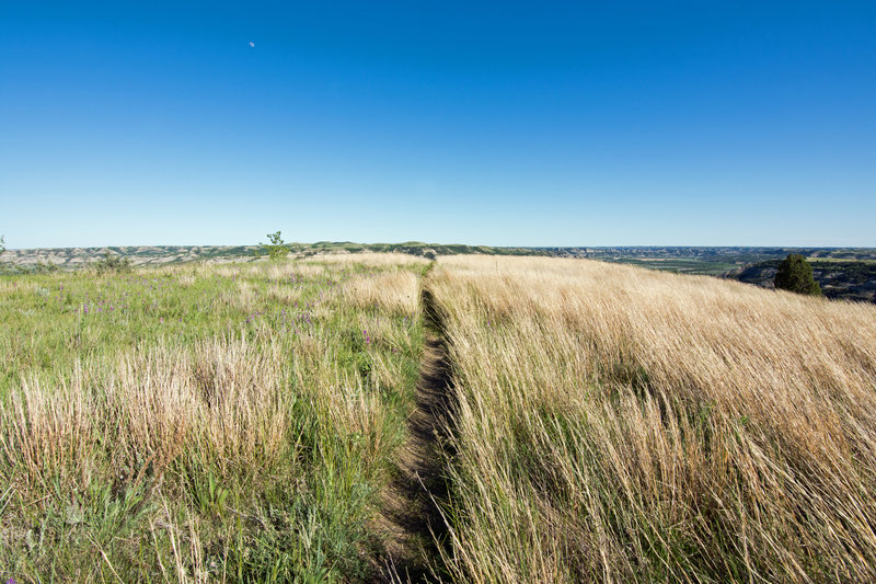 Grassland is the name of the game on the way to Sperati Point.