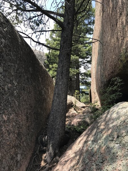 This is the way through the boulder outcropping on Shaylyn Ridge (by squeezing past the tree). Stay on the ridge, and do not go to the north side (the right side when ascending).