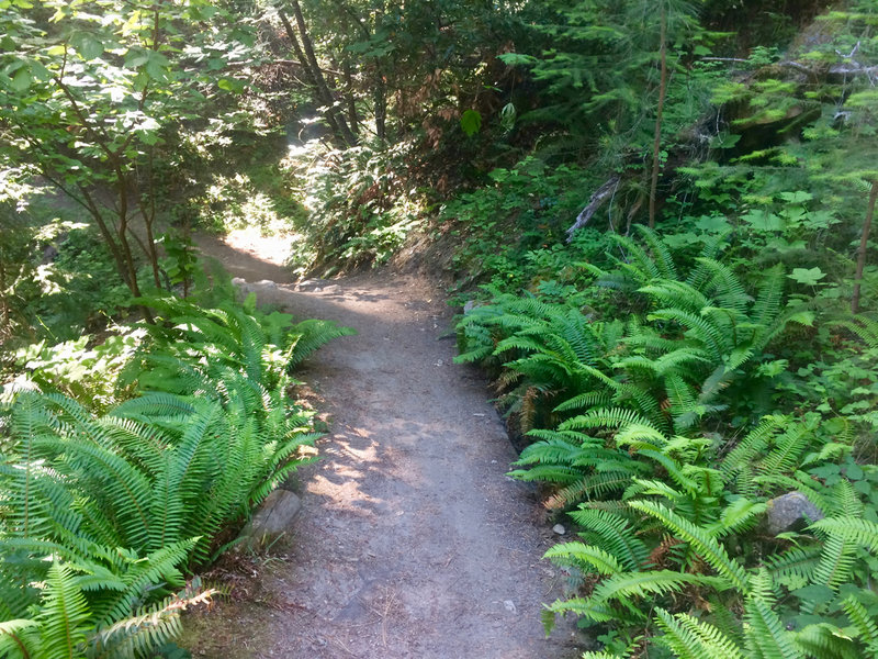 The Toothpick Trail offers plenty of shade amongst the ferns.