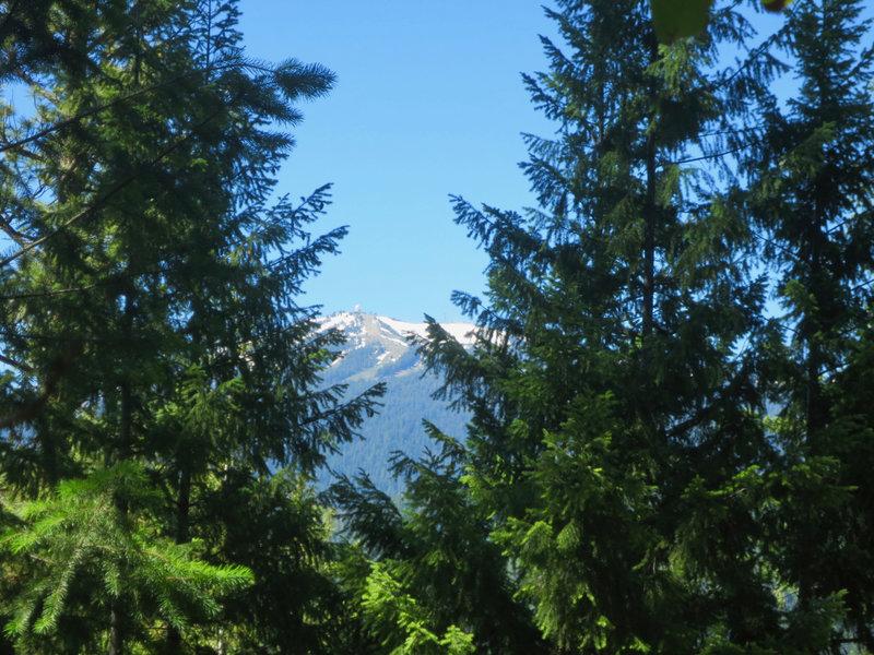 Marty's Trail: Mt Ashland view