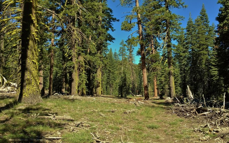 Nobles Emigrant Trail (West) goes through small meadows nestled in the old-growth fir forest.