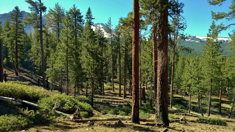 Experience the fir forests and mountains of Lassen Volcanic National Park. The Chaos Crags, Mt. Lassen, and nearby peaks can be seen through the pines along the Nobles Emigrant Trail (West).