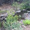 Cottonwood Creek flows along the trail.