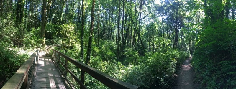 The Marquam Trail is a well-maintained trail with plenty of easy creek crossings.