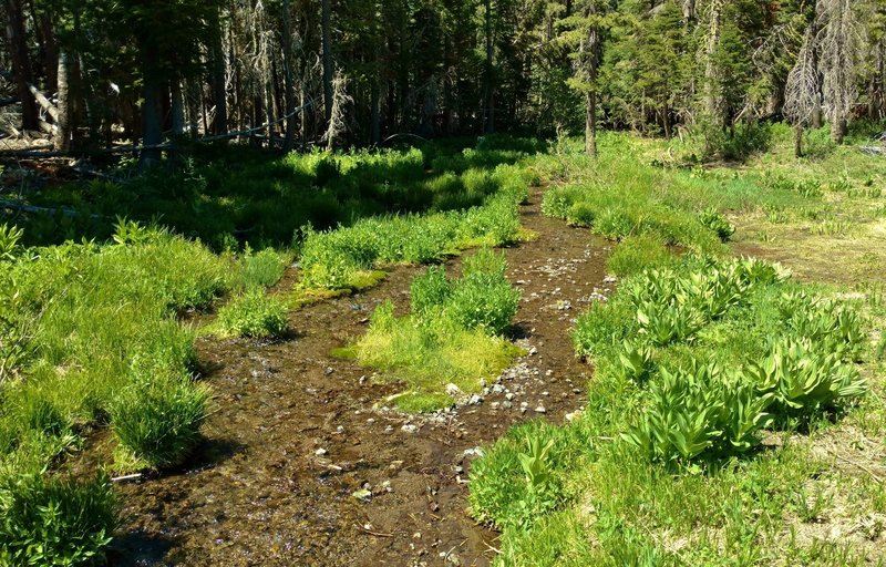 Upper meadows spring to life with the snowmelt runoff in late June and July.