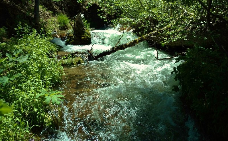 You'll have to navigate this Manzanita Creek crossing on the Manzanita Creek Trail.