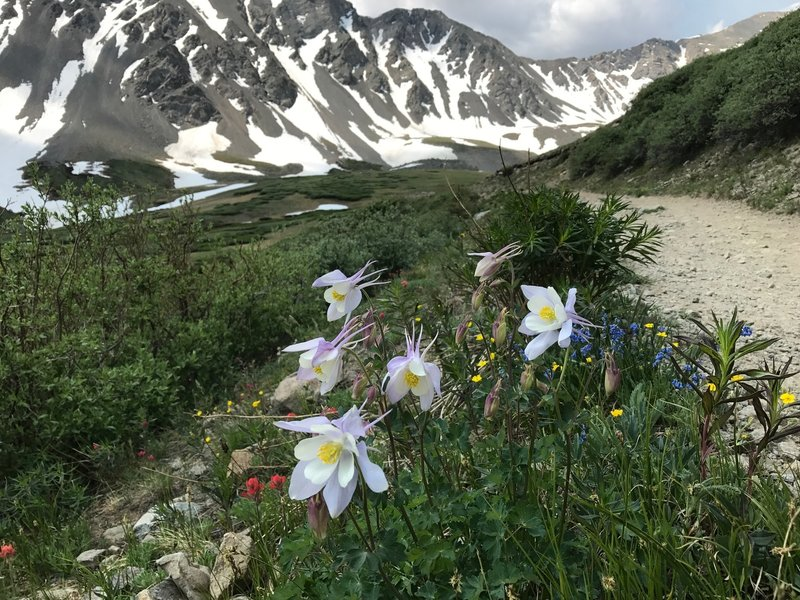 On the trail up to Grays Peak.