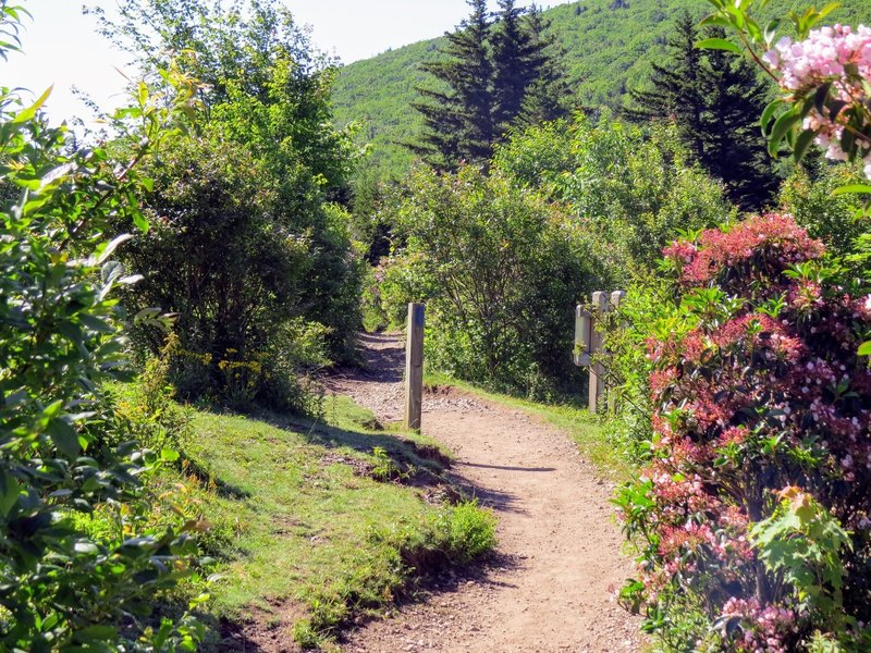Sections of the Rhododendron Trail are quite beautiful when the shrubs are in bloom.