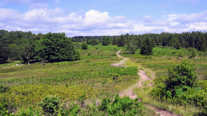 Dolly Sods looks a lot more like Canada than the Appalachian Mountains of the Northeast US.