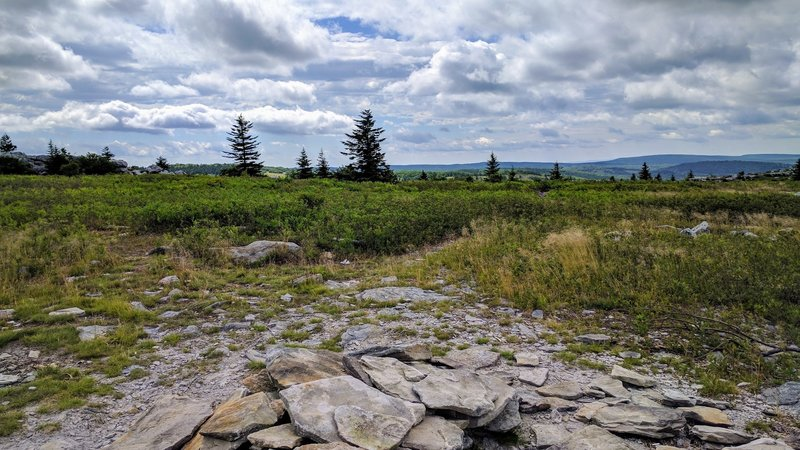 Utilize this great campsite off the Rocky Ridge Trail in the Dolly Sods Wilderness.