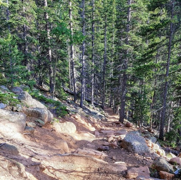 Roots, rocks, and ruts make up this portion of the trail.