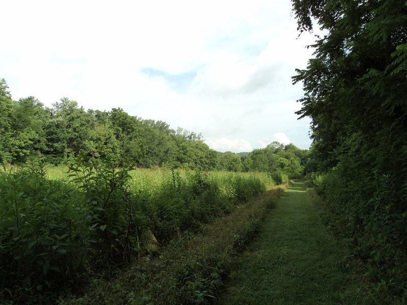 The grass pathway of the Lower Field Loop Trail.