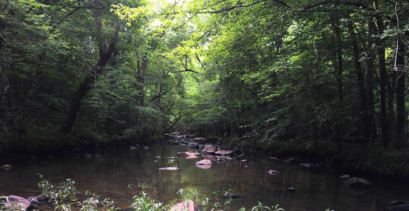 A canopy of trees shades the North Fork Little River.