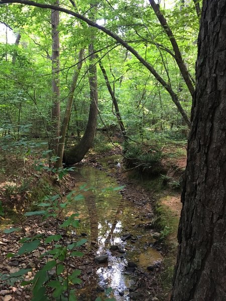 Rocky Bottom Creek trickles into the wide North Fork Little River.