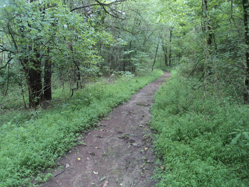 Gorgeous, winding portion of the trail northeast of the lake. I imagine this is VERY nice in the Spring.