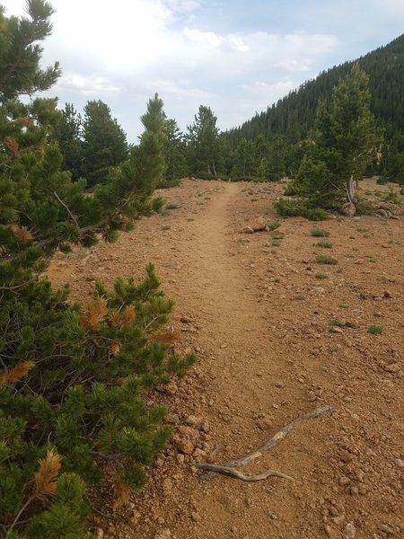 This is another barren portion of the trail up Mount Rosa (#673).