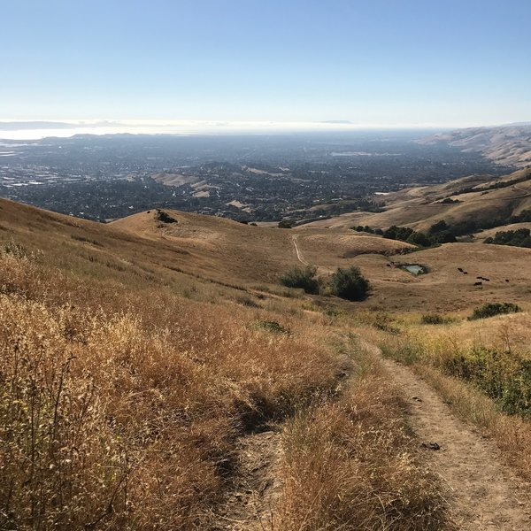 This is the ongoing view from the trail looking over the South Bay.