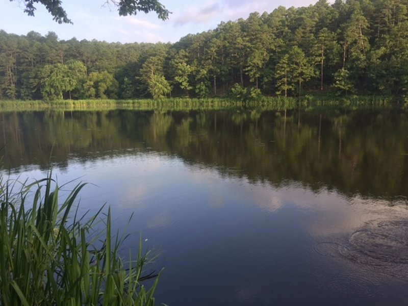 This is picture from the trail of one of the long arms of the lake. The fish were jumping.
