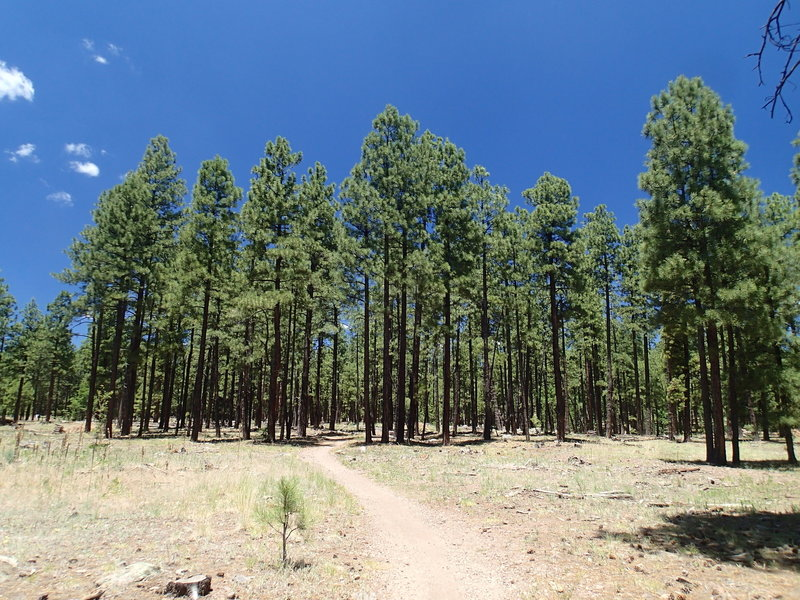 Soldier's Trail transitions from open areas to dense forests.