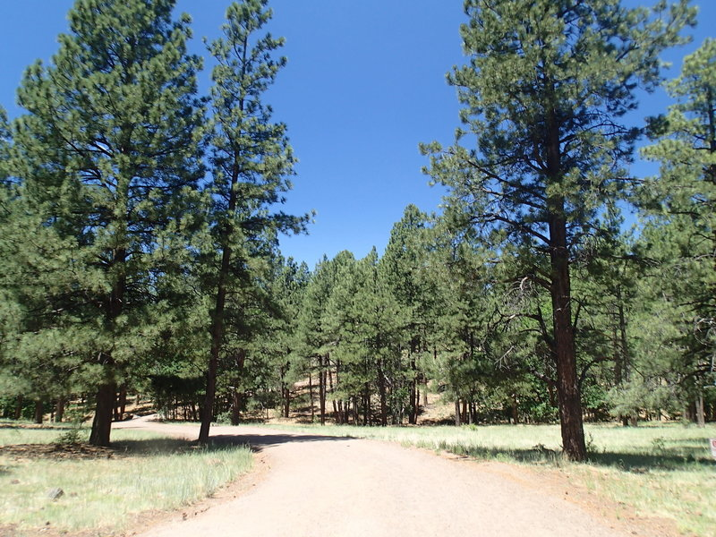 Buffalo Park Loop Trail is a wide foot path through the heart of the park.