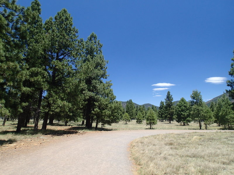 Buffalo Park Loop Trail is a wide foot path.