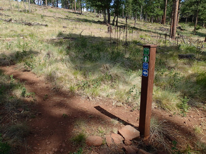 Keep an eye out for this trail junction of the Two-Spot Trail and Gold Digger Trail.