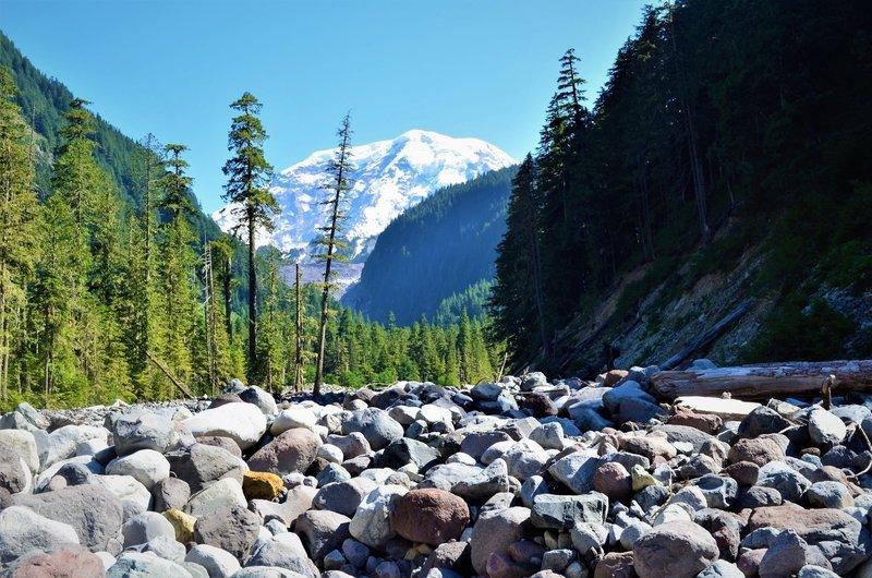 Mount Rainier stands upstream of the Wonderland Trail-Northern Loop intersection.