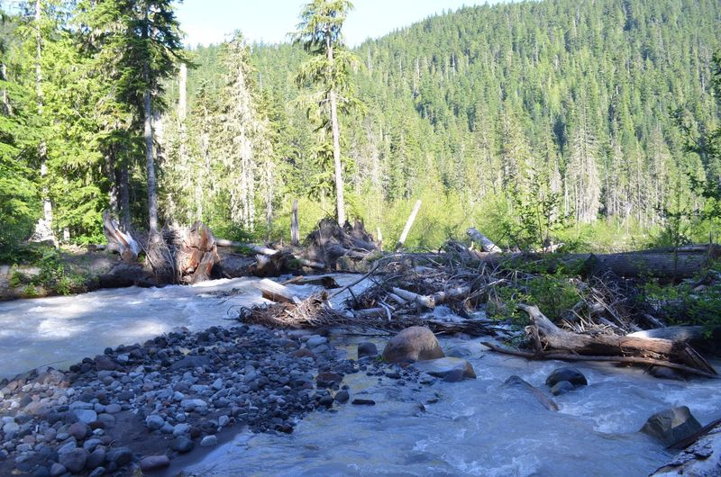 This was one third of the White River crossing (July 1, 2017). Head upstream once you've crossed the first section and look for shallow areas. Trekking poles and good footing is critical!