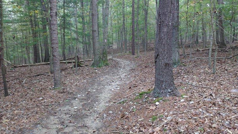 Tulip Poplar Trail traverses beautiful hardwood forests under a blanket of fallen leaves.
