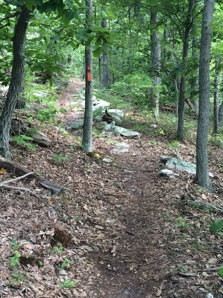 From here on out, the Massanutten Trail starts to get a little less rocky.