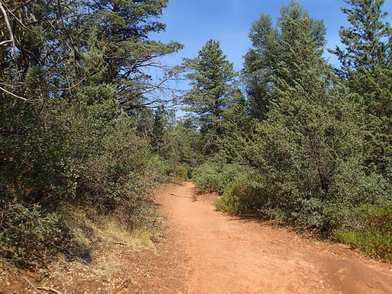 Junipers flourish along the Brins Mesa Trail.