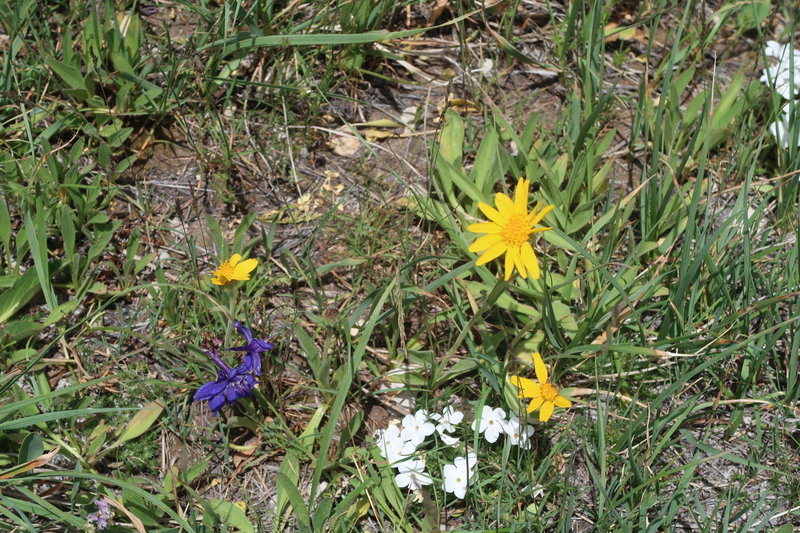 Alpine flowers flourish on the hillsides along the Popo Agie River.