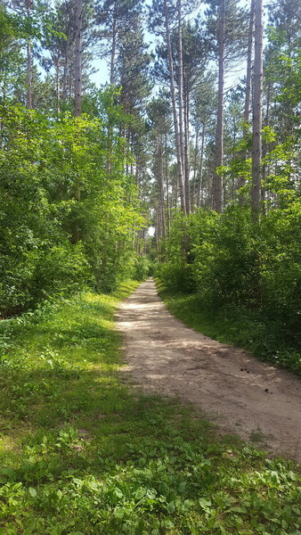 This is pretty typical for the Scuppernong Trail.